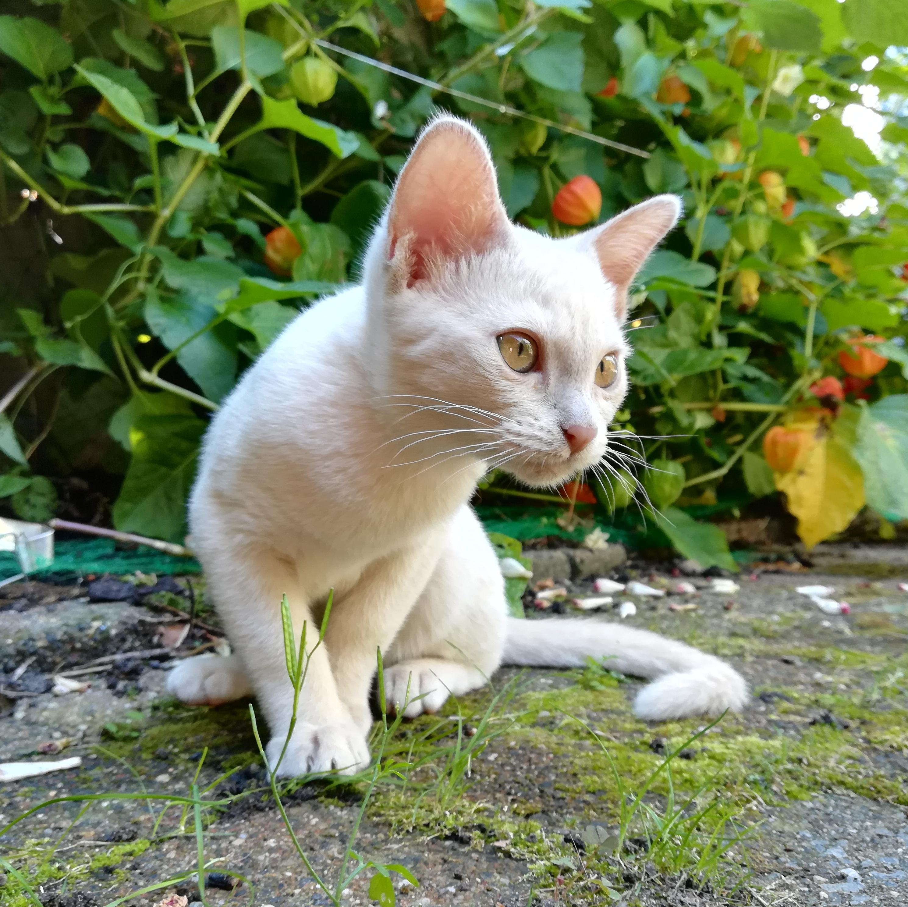 Pomme, fawn, 4 maanden oud